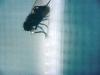 thefly2