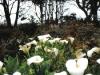 tassi_flowers01