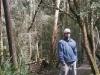 tassie_forest_15a