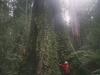 tassie_forest_16a